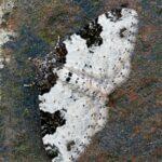 Paśnik chrzaniak (Xanthorhoe fluctuata)